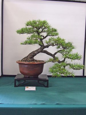 Hamilton Bonsai Club - Annual Show 2015