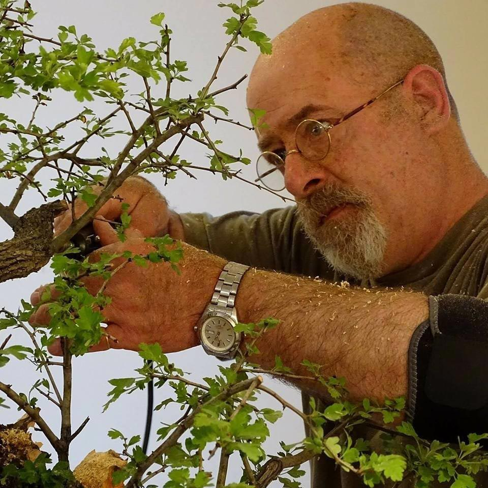 Hamilton Bonsai Club - Will Baddeley Workshop 2018